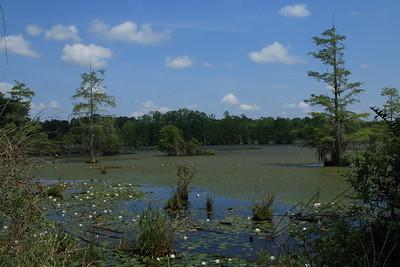 South Carolina Bog