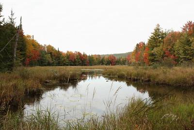 Freshwater marsh in autumn