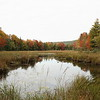 Freshwater marsh in autumn