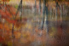 Impressionist-like reflections in a pond near Tracy City, Tennessee.