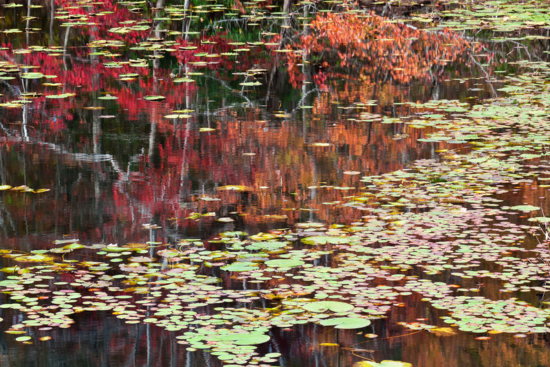 Water lily pads and autumn colors reflect in the calm waters of a lake off Highway 70, south of Monterey, Tennessee, and just west of Camp Nakanawa.