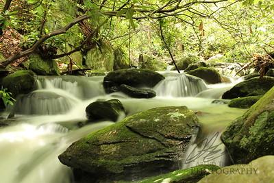 Great Smokey Mountains stream