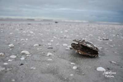 Beaches of Sanibel Island, Florida