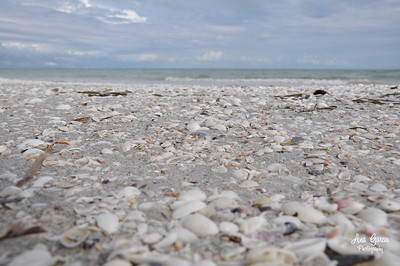 Beaches of Sanibel Island, Florida  | Florida Nature, Landscape Photographer, Home Decor Prints  | Fine Art Photography Prints Wall Art