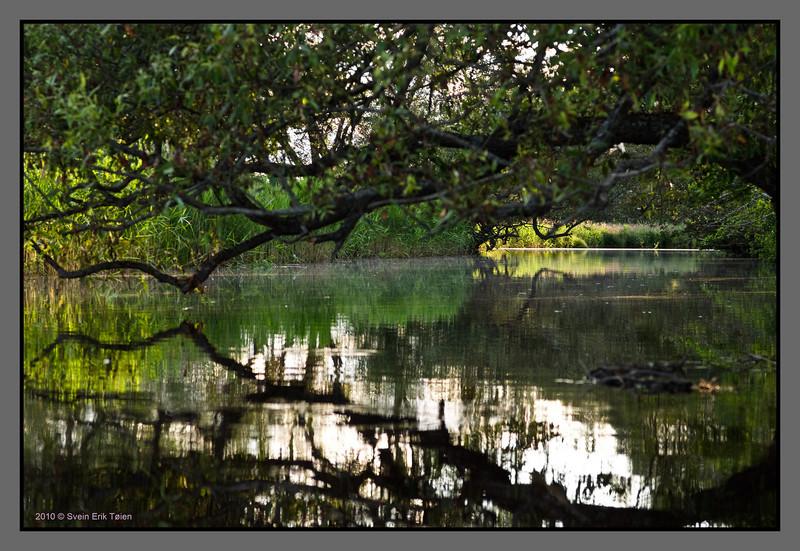 Reflecting branch
