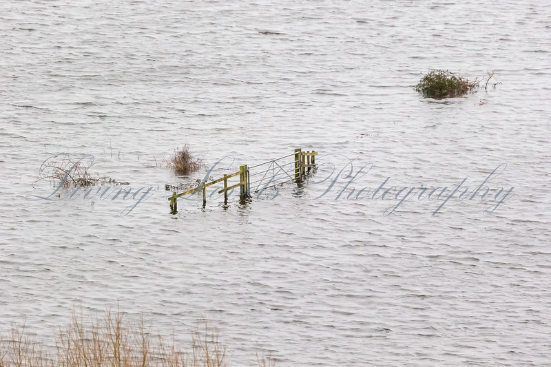 "Partially submerged and isolated gate in the Somerset Levels at the base of the ""Mump"" at Burrowbridge."