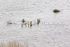 """Partially submerged and isolated gate in the Somerset Levels at the base of the """"Mump"""" at Burrowbridge."""
