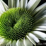 Doug-Austin-Photography's photo