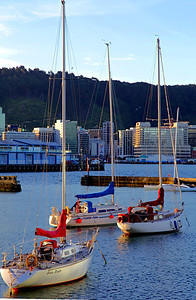 Sail boats in the harbour, Wellington, New Zealand