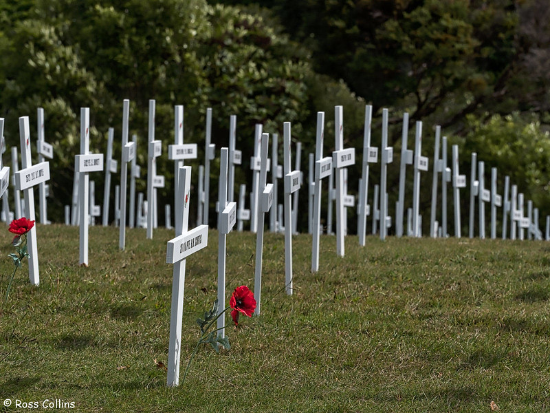 Field of Remembrance, Wellington Botanic Garden, 24 April 2018