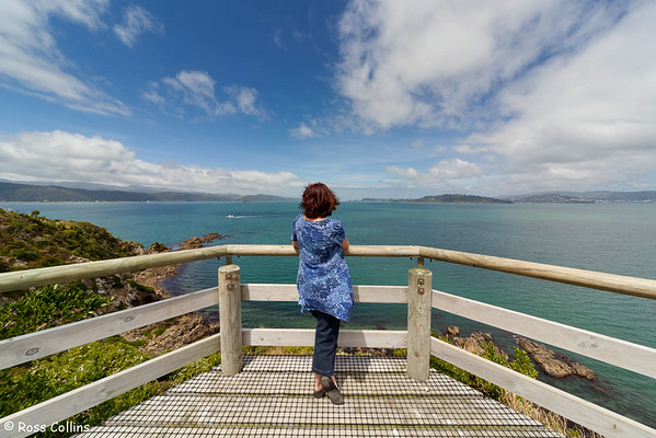 Matiu/Somes Island, Wellington Harbour, 24 January 2012