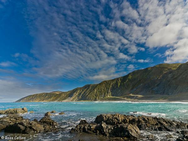 Wellington's South Coast