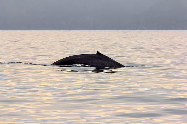 Kenai Fjords National Park<br /> 2014
