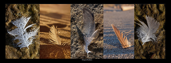 oregon feathers copy