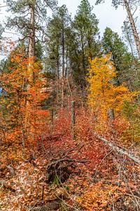 Oak Creek West Fork 2014-22