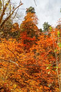 Oak Creek West Fork 2014-10