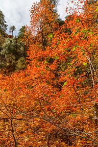 Oak Creek West Fork 2014-4