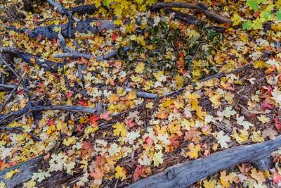 Oak Creek West Fork 2014-16