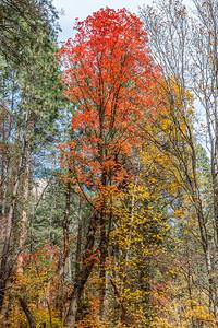 Oak Creek West Fork 2014-23