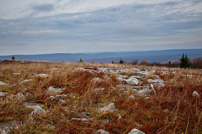 Canaan Valley, WV (IMG_0566)