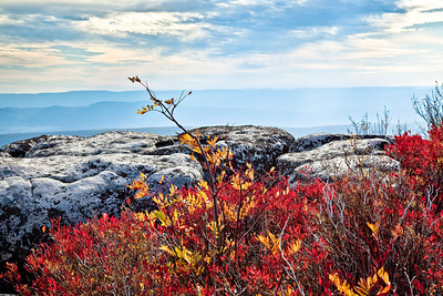 Allegheny Mountains, Dolly Sods, WV (IMG_0472)