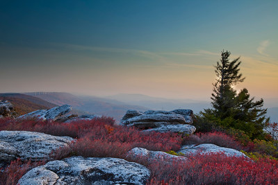 Allegheny Mountains, Dolly Sods, WV (IMG_2188)