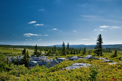 Allegheny Mountains, Dolly Sods, WV (IMG_0329)