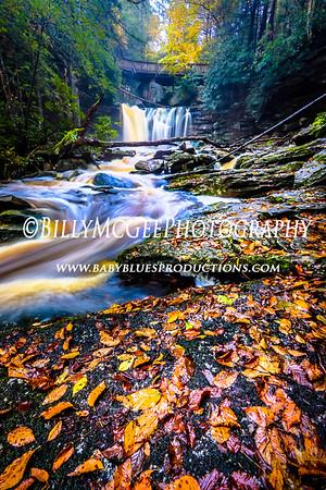 Elakala Water Falls - 11 Oct 2014