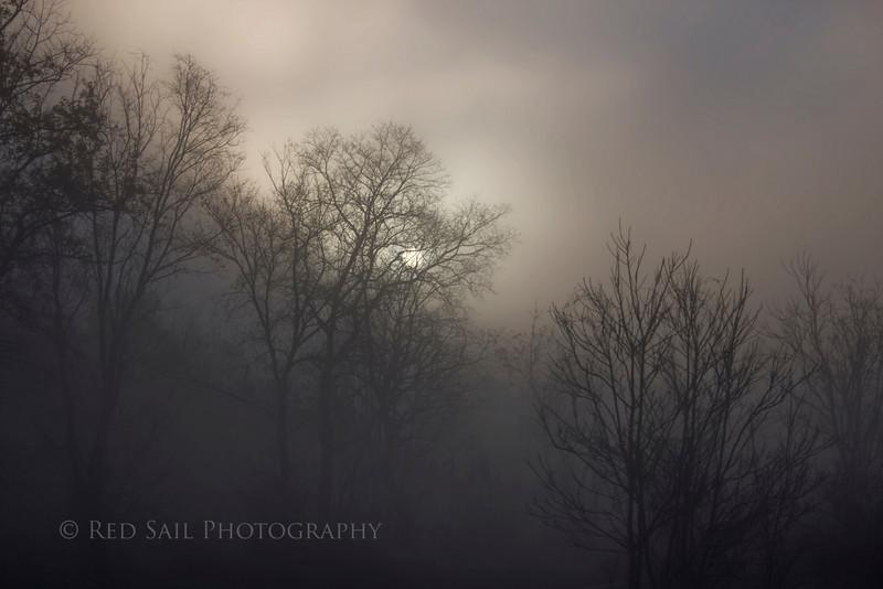 Sunrise in the fog.