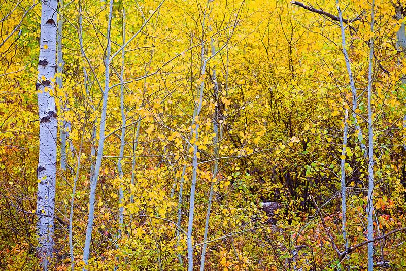Idaho, Mesa Falls Scenic Byway, Fall Colors, 爱达荷, 秋色