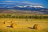Montana, Ennis, Hay Rolls, 蒙大纳,黄石公园, 干草卷,风景