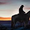 Westcliffe Horses #3625