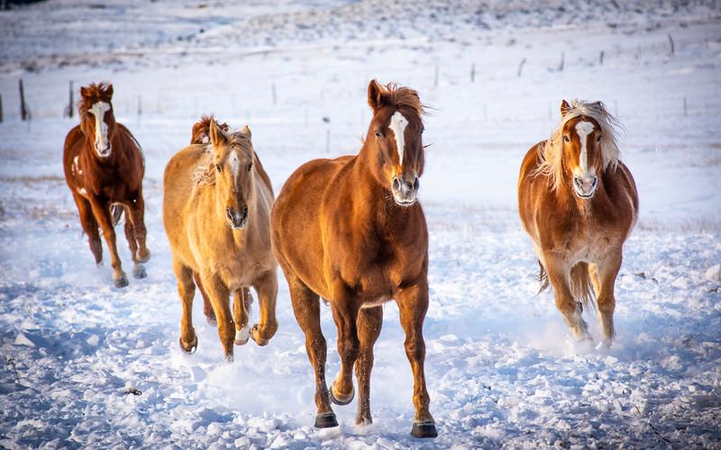 Westcliffe Horses #4050