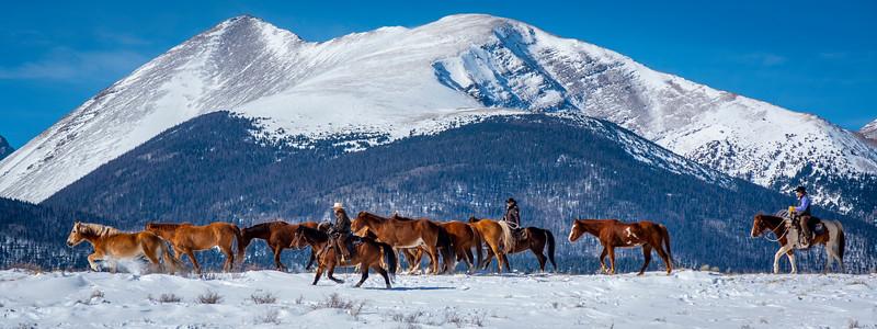 Westcliffe Horses #4610