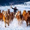 Westcliffe Horses #4161