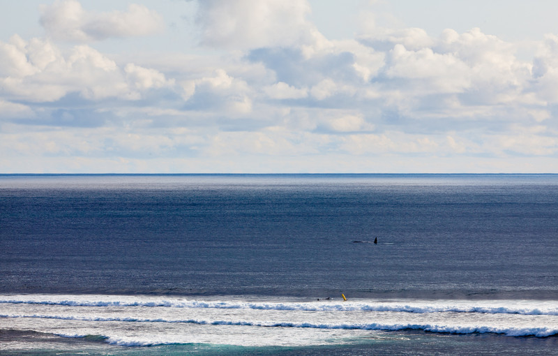 Whale and Surfers near Margaret River, Western Australia