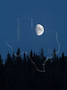 Moon and Pines,<br /> Banff National Park, Alberta, Canada
