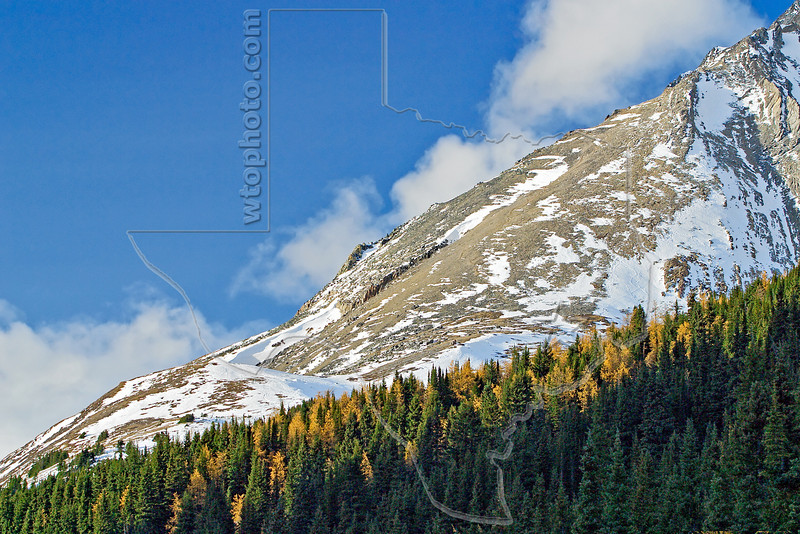 Larch Pine, Fall Color, Canadian Rocky Mountains,<br /> Kananaskis Country, Alberta, Canada