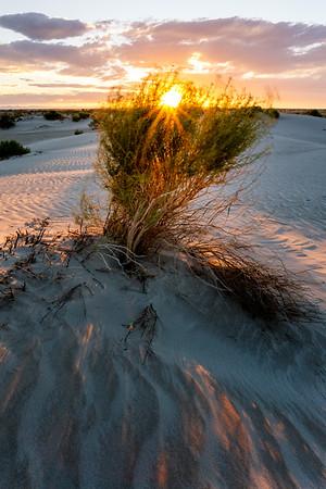 Brush and sunset