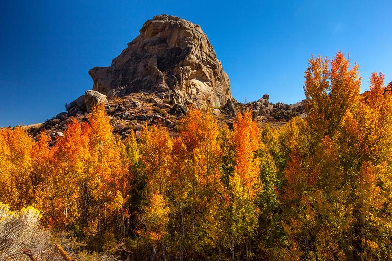 Ruby Mountains Autumn 4_7443