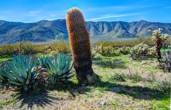 Scenery in Anza Borrego State Park, California