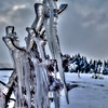 Ice Sculpture, Yellowstone National Park