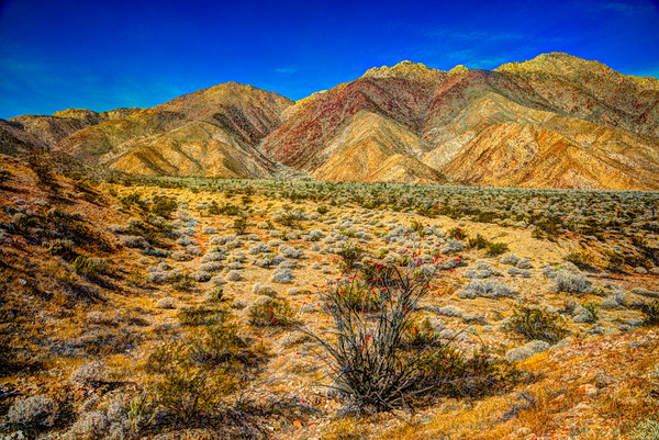 Anza Borrego State Park #1, California
