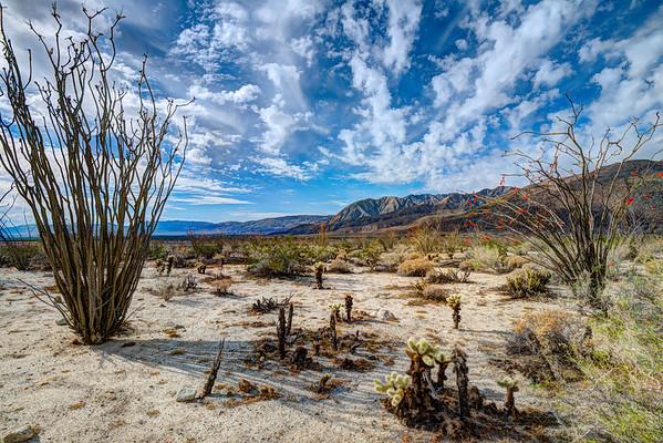 Spring in Anza Borrego State Park, California