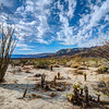 Spring in Anza Borrego State Park, California