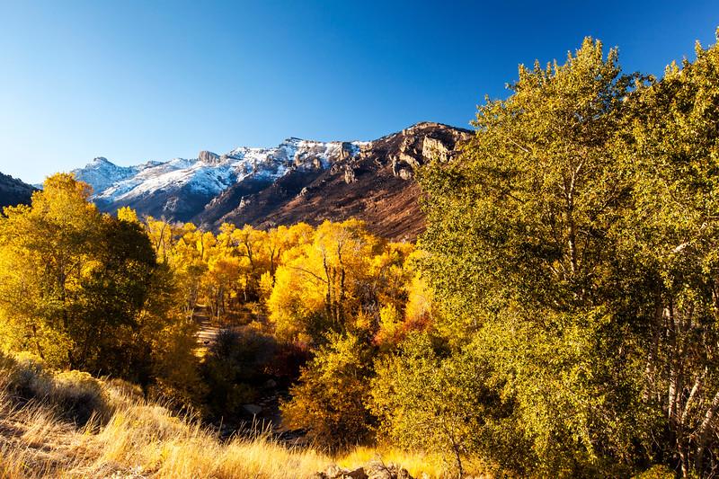 Ruby Mountains Autumn 2_7436