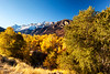Ruby Mountains Autumn 2_7436