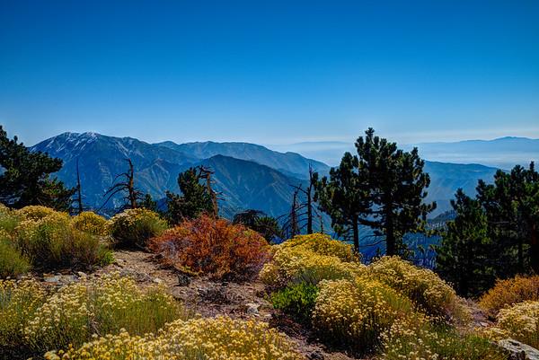 Fall Colors in the San Gabriel Mountains, California