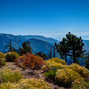 Fall Colors in the San Gabriel Mountains, California