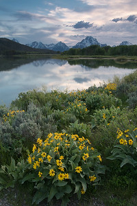The view from Oxbow Bend of the Snake River.